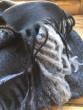 Kašmírová šála černá