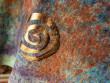 Batikované tričko spirálky